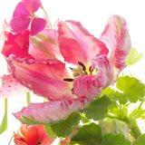 Parrot Tulip One Art Print