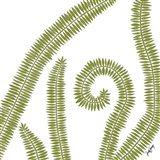 Curly Fern Art Print