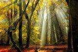 Yellow Leaves Rays Art Print