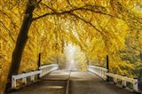 Bridge to Fall III Art Print