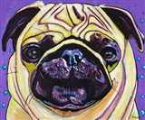Purple Pug Art Print