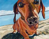 Sand Dog Art Print