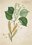 Flower Drawing 9 Art Print