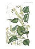 Flower Drawing 20 Art Print