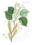 Flower Drawing 22 Art Print