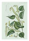 Flower Drawing 23 Art Print