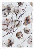 Cotton II Art Print