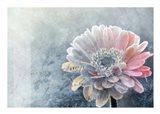 Winter Flower Art Print