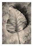 Dried Leaf Art Print