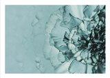 Close up Flower Art Print