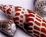 Linen Shell Collage Art Print