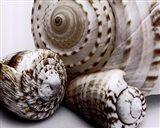 Shell Collage Art Print
