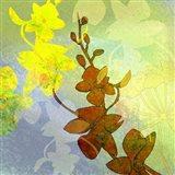 Ochid Shadows 2 Art Print