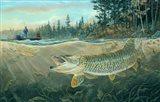 Muskie Bay Art Print