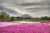 Mount Fuji Pink Moss Art Print