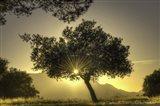 Sunburst Through a Tree Los Angeles Art Print