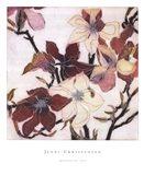 Magnolias XIX Art Print