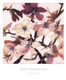 Magnolias XX Art Print