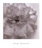 Blossom [One] Art Print