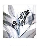 Eucalyptus Art Print