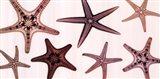 Starfish Collection (Sepia) Art Print