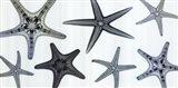 Starfish Collection (Teal) Art Print