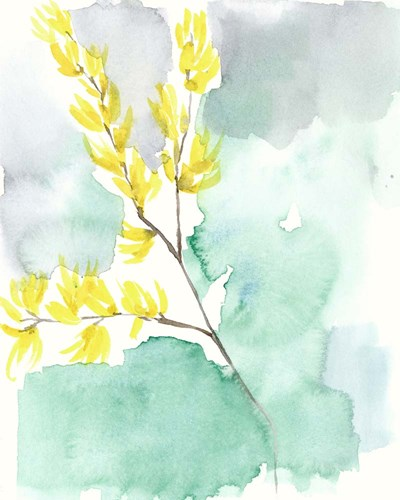Forsythia Dreams I