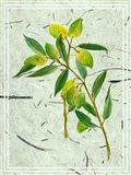 Olives on Textured Paper I Art Print