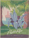 See South America IV Art Print