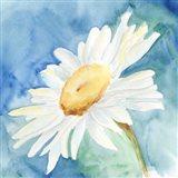 Daisy Sunshine I Art Print