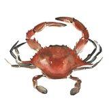 Watercolor Crab I Art Print