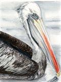 Grey Pelican I Art Print