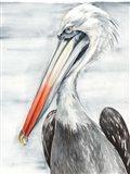 Grey Pelican II Art Print