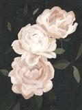 Nighttime Flora III Art Print