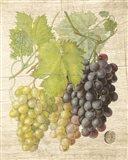 Grapevine I Art Print