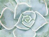 Storybook Succulent II Art Print
