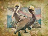 Pelican Paradise IV Art Print