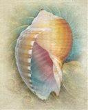 Aquatica III Art Print