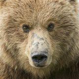 Bear Life I Art Print