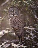 Owl in the Snow I Art Print