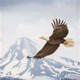 Majestic Eagle II Art Print