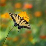 Butterfly Portrait I Art Print