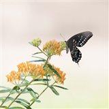 Butterfly Portrait II Art Print