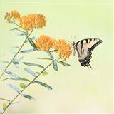 Butterfly Portrait III Art Print