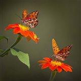 Butterfly Portrait VI Art Print