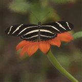 Butterfly Portrait VII Art Print