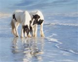 Water Horses I Art Print