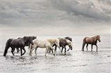 Water Horses IV Art Print