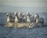 Water Horses VI Art Print