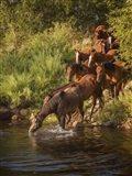River Horses I Art Print